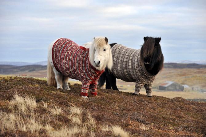Style Ivy League : le Shetland Fair Isle