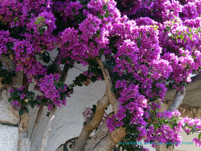 capri-by-milanese-special-selection-3